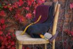 rogata małgorzata listopadowy las 5 lużno